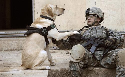 hundsoldat