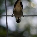 Fågel - Upp och ner