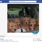 sociala-medier-hundvalpar