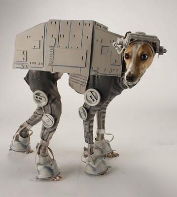 Udda hundkläder